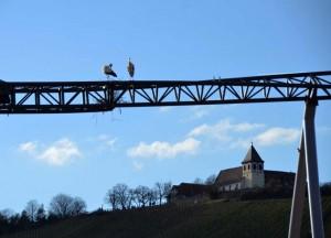 Störche beim Nestbau - Motorradtour Strohgäu und Löchgau