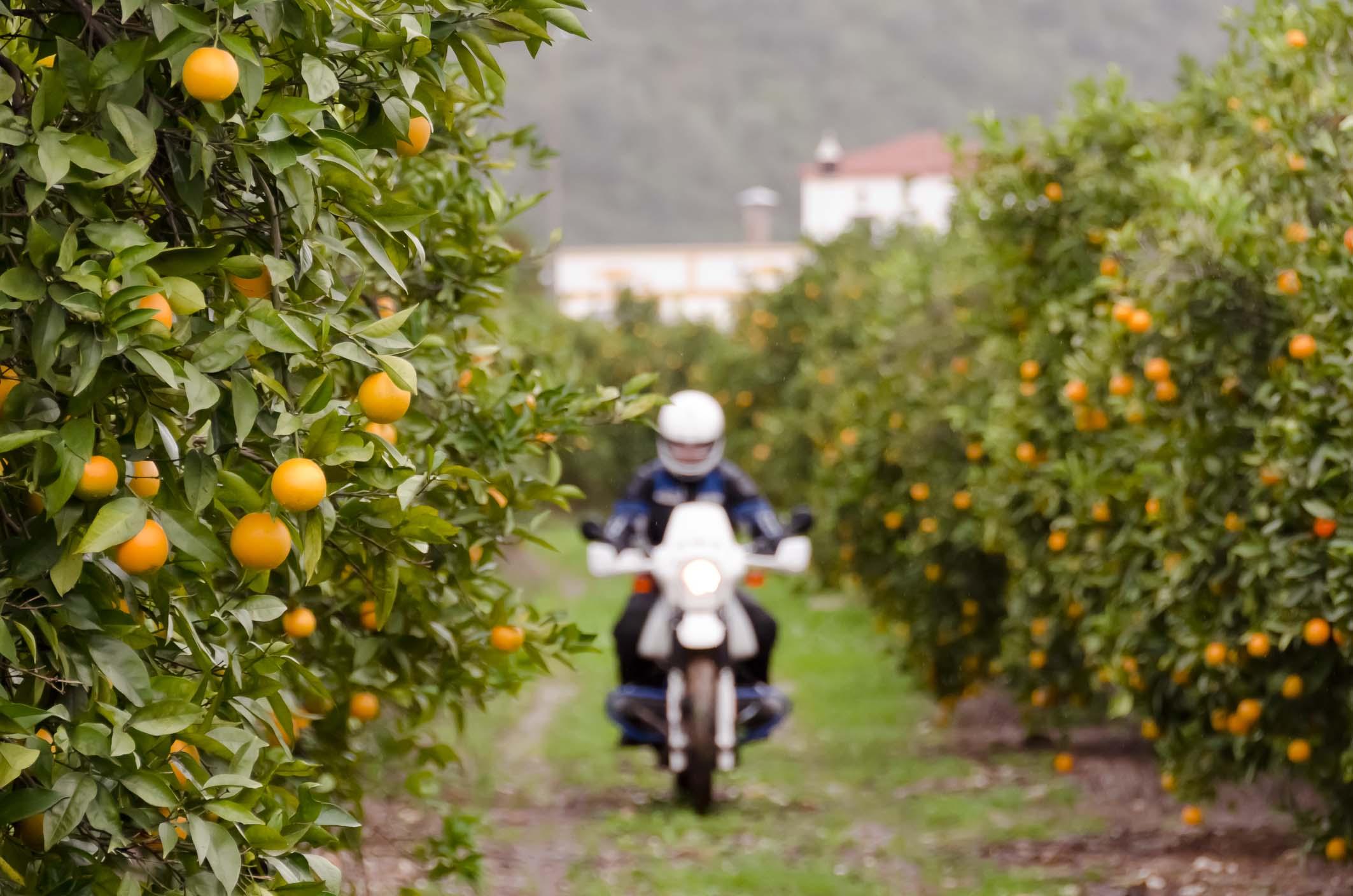 E09_Orangenhain1